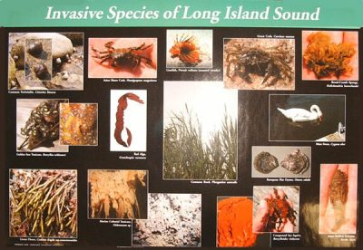 LIS Invasive Species poster