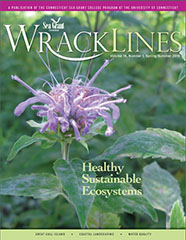 Wrack Lines 15-01 cover