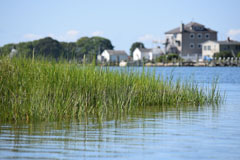 Bakers_Cove_marsh