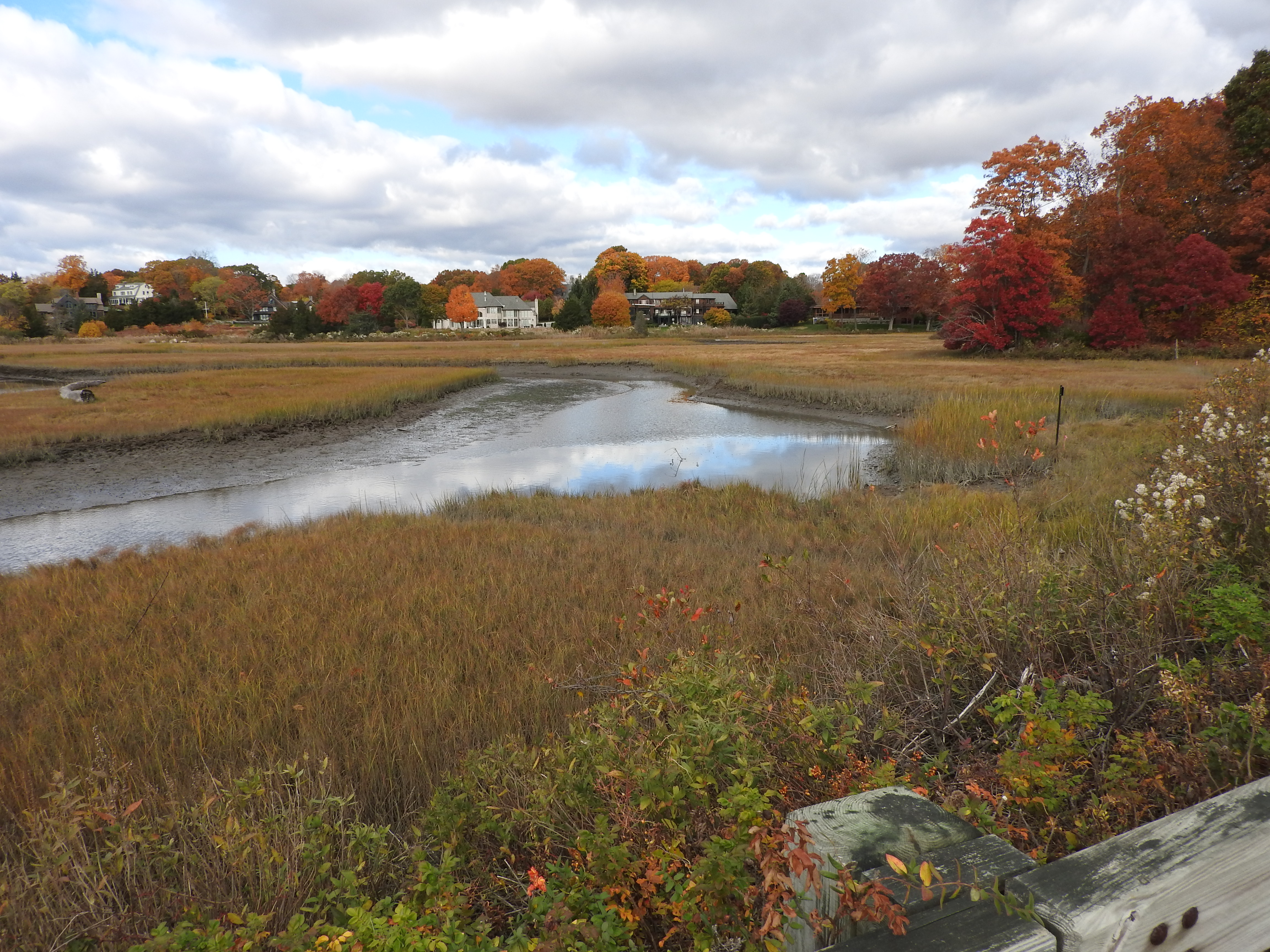 photo of Fence Creek marsh in Madison, Conn.