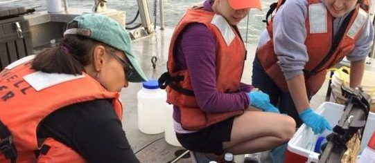 Researchers collecting water samples on Long Island Sound in August.