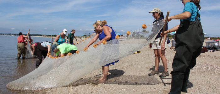 Teachers at a Long Island Sound Mentor Teacher workshop at Hammonasset Beach State Park on Sept. 26 drag in a seine net as Diana Payne, Sea Grant educator coordinator, looks on.