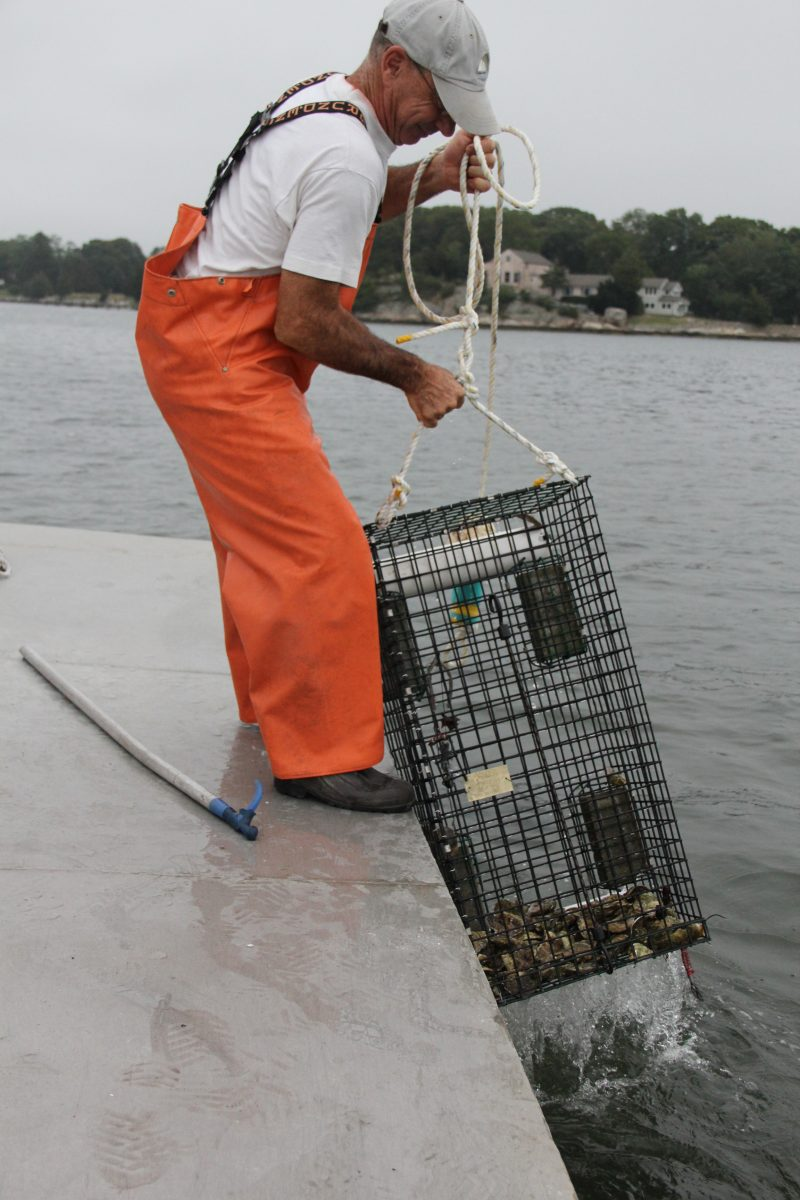 Steve Plant of Connecticut Cultured Oysters lowers a cage of oysters into the Mystic River.