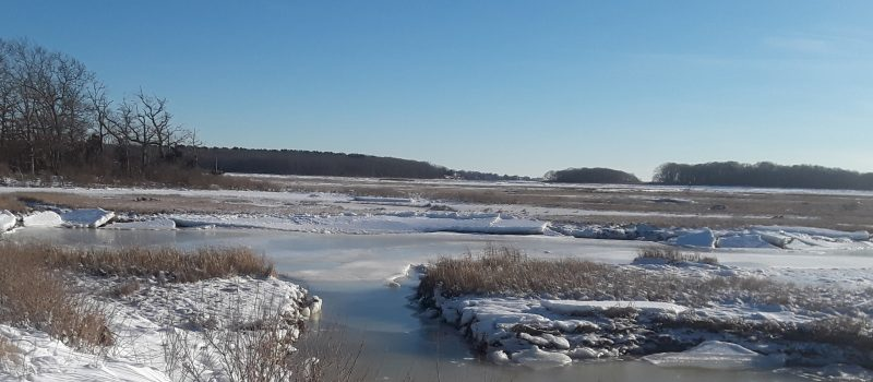 Winter marsh: Salt marshes like those at the Barn Island Wildlife Management Area in Stonington were among coastal habitats assessed in new research on resiliency.