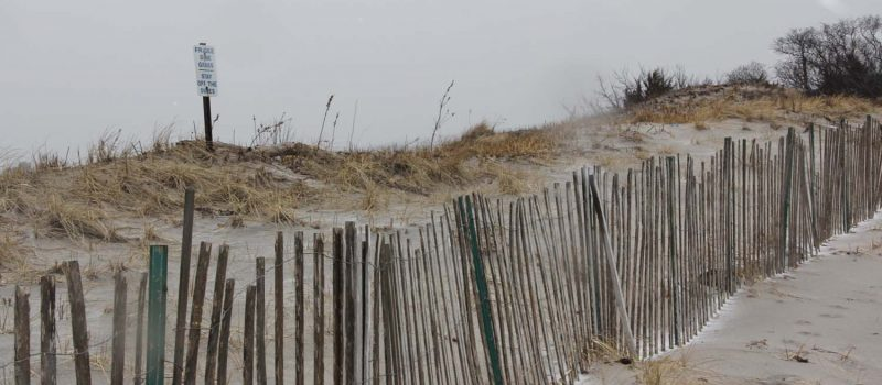 Dunes like these at Waterford Town Beach have helped protect against beach erosion from the four nor'easters this March.