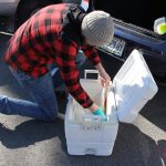 Jake Madden packs the water samples on ice for the trip to the testing lab in Maine.