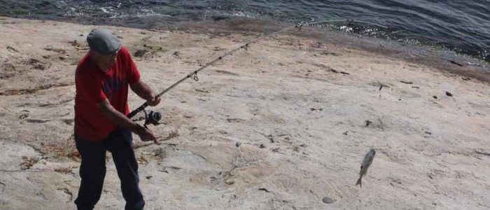 A fishermen reels in a porgy off the rocks at UConn Avery Point on June 20. Porgy have become more abundant in Long Island Sound in recent years due to warming waters.