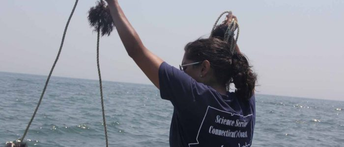 Anoushka Concepcion gets a line strung with gracilaria ready to deploy in Norwalk harbor for a testing project for the edible seaweed.