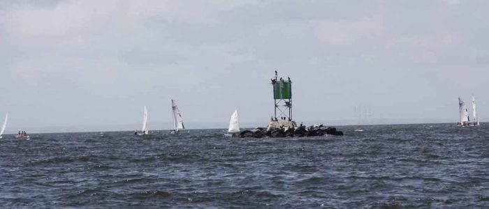 Sailors and seabirds: student sailors practice their skills around a channel marker that serves as a roost for cormorants in Bridgeport harbor.