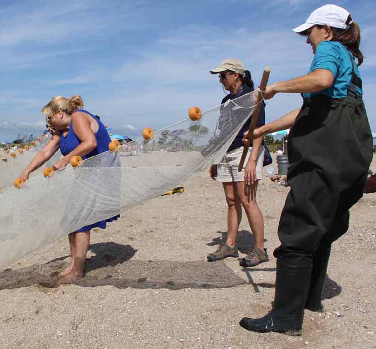 Diana Payne, center, works with teachers learning to use a seine net at Hammonassett Beach State Park in Madison.
