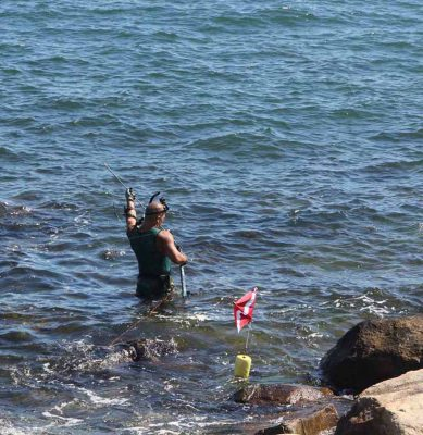 A spearfisherman readies his gear before diving in the waters off UConn Avery Point in Groton on July 19.