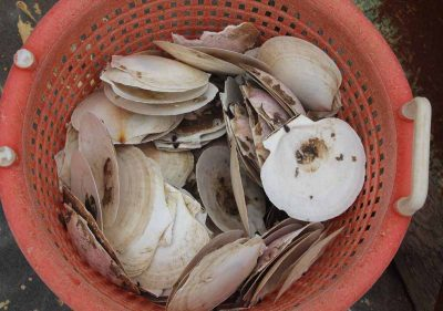 A bucket of sea scallop shells was displayed aboard Joe Gilbert's vessel during the open house.