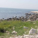 Salt marsh, rocky shore and sandy beach habitats are all visible from Avery Point.