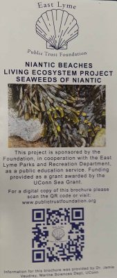 "Niantic Beaches Living Ecosystem Project ""Seaweeds of Niantic"" pamphlet cover"