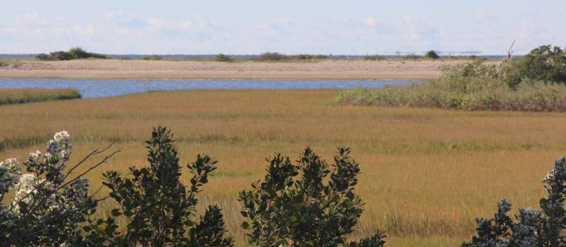 Bluff Point State Park in Groton and the lower Connecticut River are being proposed for nomination as a National Estuarine Research Reserve.