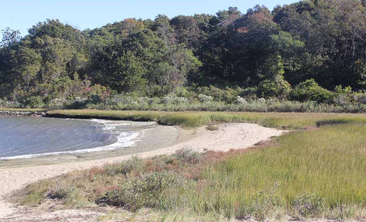 Coastal forest, barrier beach and salt marsh habitats can all be found at Bluff Point.