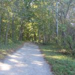 The main trail at Bluff Point State Park passes through a coastal hardwood forest.