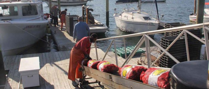 Workers at Briarpatch Enterprises unload clams harvested from beds in Milford. Creation of plan to open the way for restoration of addtitional shellfish beds has been announced.