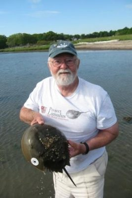 Kenneth Beatrice of East Haddam is seen here with one of the horseshoe crabs he tagged while volunteering with his Project Limulus. His wife Bonnie, also a Project Limulus volunteer, took the photo.