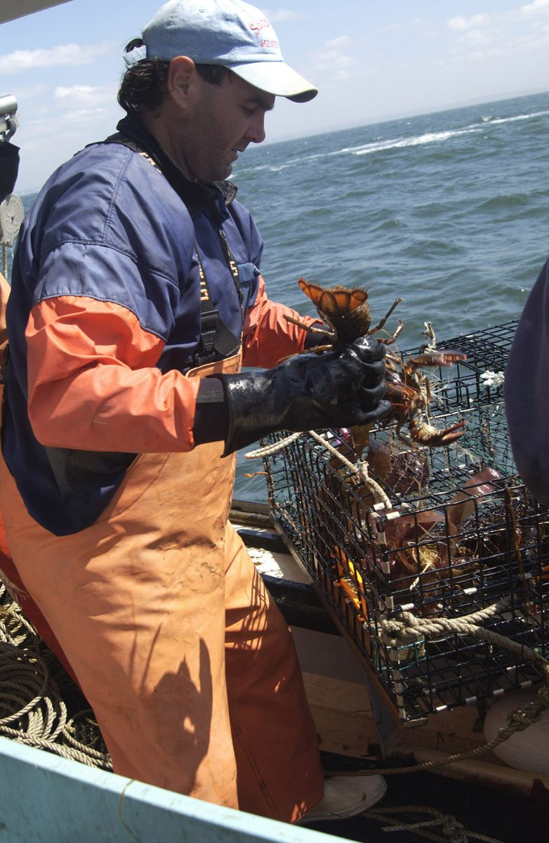 A crewman aboard the Jeanette T removes lobsters from a trap.