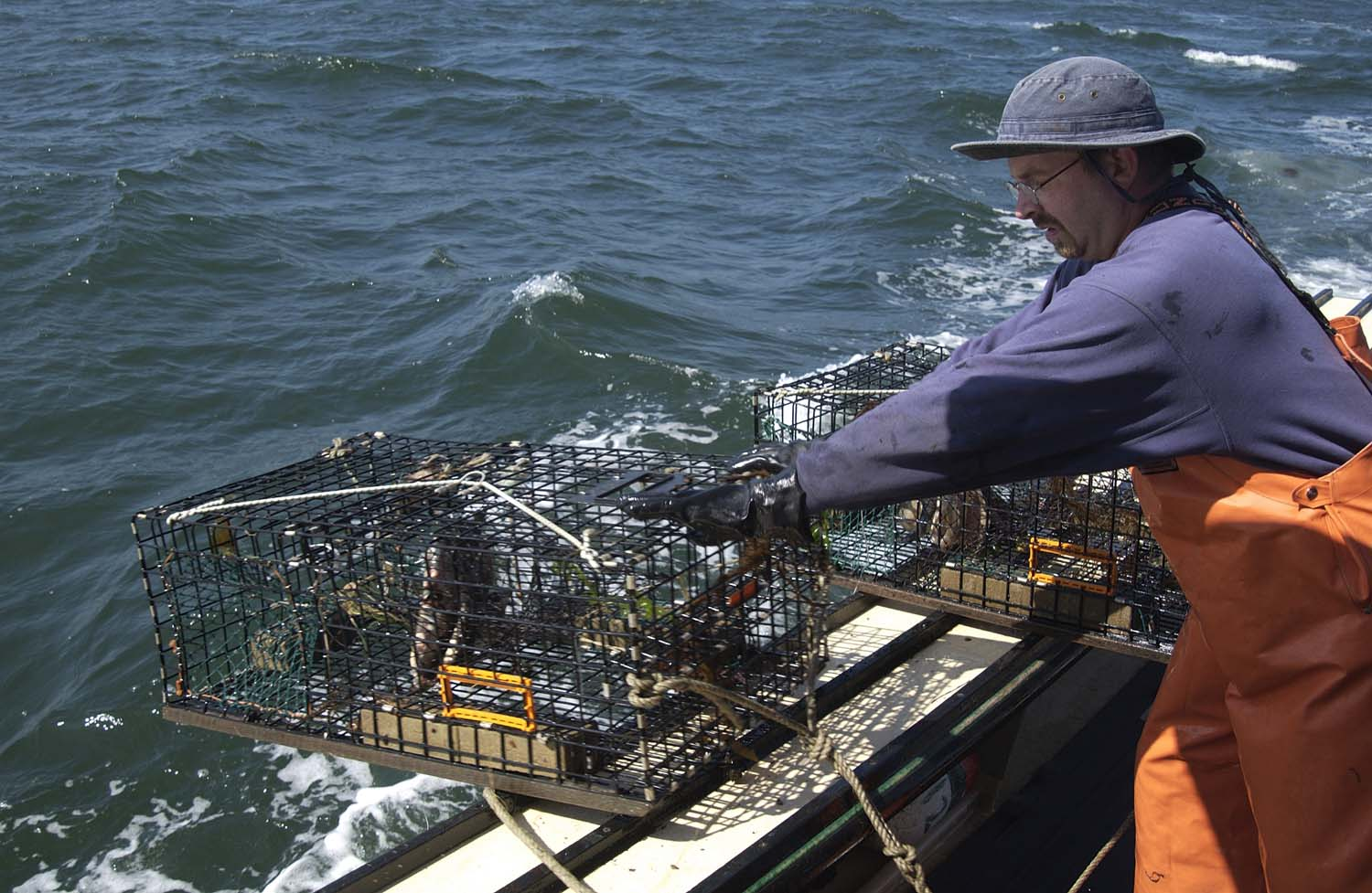 A crewman releases baited lobster traps off of the Jeanette T, a lobster boat owned by Mike Theiller that was fishing out of New London in 2005. Most of the remaining commercial lobstering in Connecticut occurs in eastern Long Island Sound.
