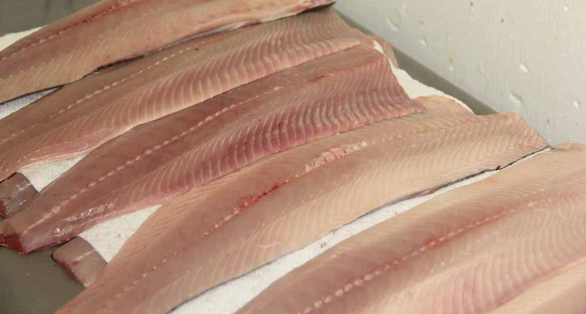Freshly cut shad fillets are sold at Hale's Shad in Rocky Hill. Judy Benson / Connecticut Sea Grant