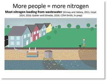 Nitrogen, which can come from sources such as human wastewater and fertilizer, can enter into local waters. Research has shown excessive nitrogen to be a prime ingredient in more potent (and potentially toxic) algal blooms.