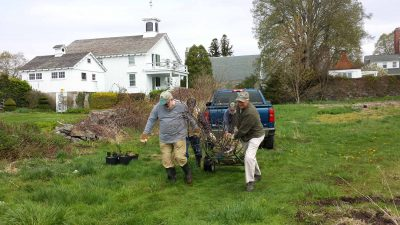 Volunteers from the Avalonia Land Conservancy move a shad bush into place for planting at the Dodge Paddock Beal Preserve in Stonington on May 3 as part of a restoration and living shoreline project with Connecticut Sea Grant.