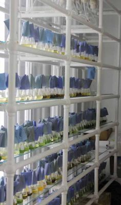 The Milford lab's microalgal collection contains 230 strains of algae.