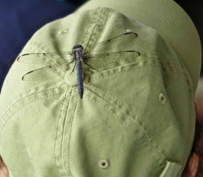 A dragonfly hitches a ride on a passenger's hat during the workshop.