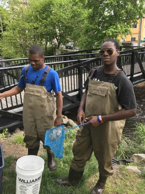 Students from Poughkeepsie High School are equipped with waders, nets and buckets for a day of collection as part of the Eel Project.