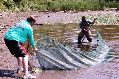 Volunteers use a seine net to collect river creatures for a survey of river life.