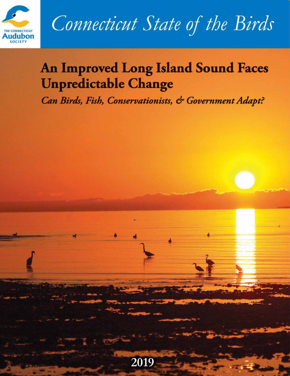 Cover of the 2019 Connecticut State of the Birds report.