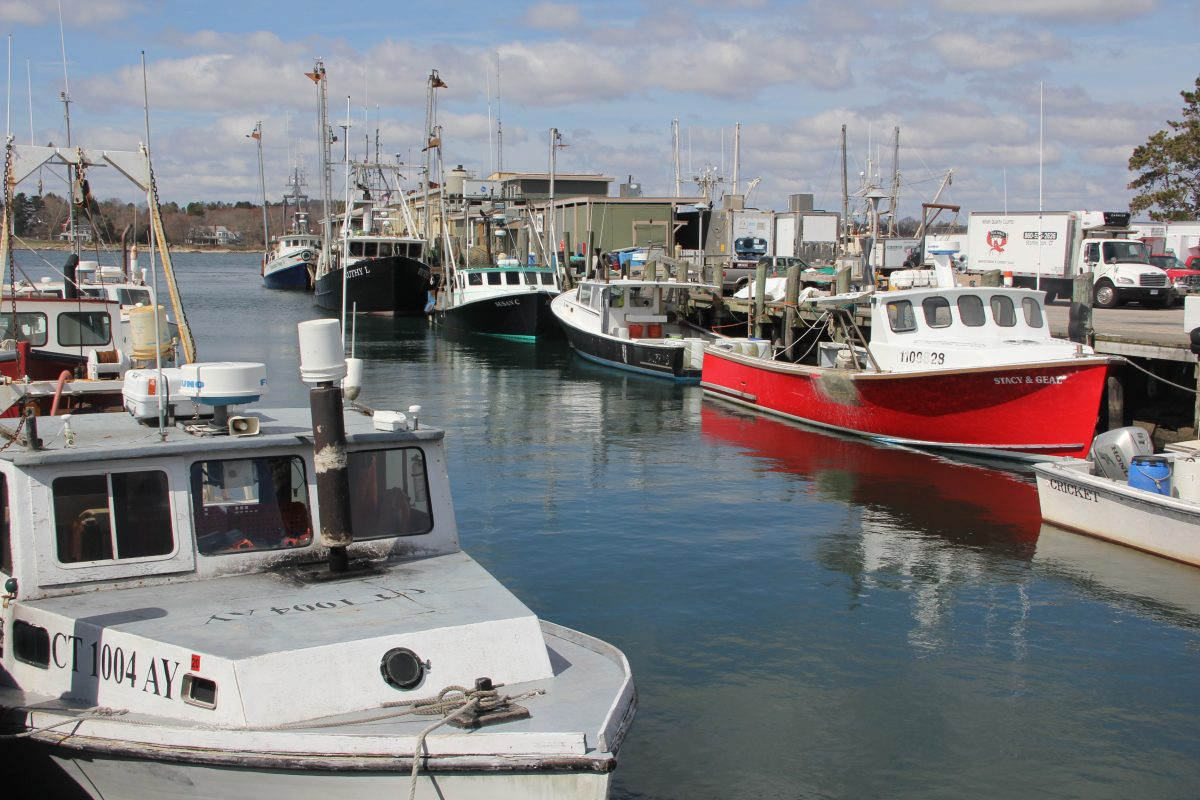 Most of Connecticut's commercial fishing fleet works out of the Town Dock in Stonington.