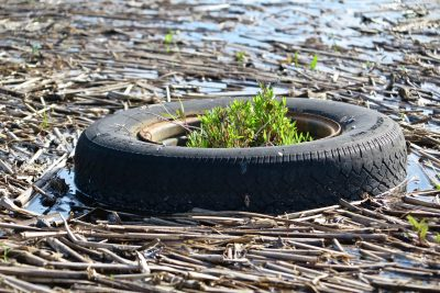 A discarded tire sits in a marsh in Old Saybrook. Judy Preston / Connecticut Sea Grant