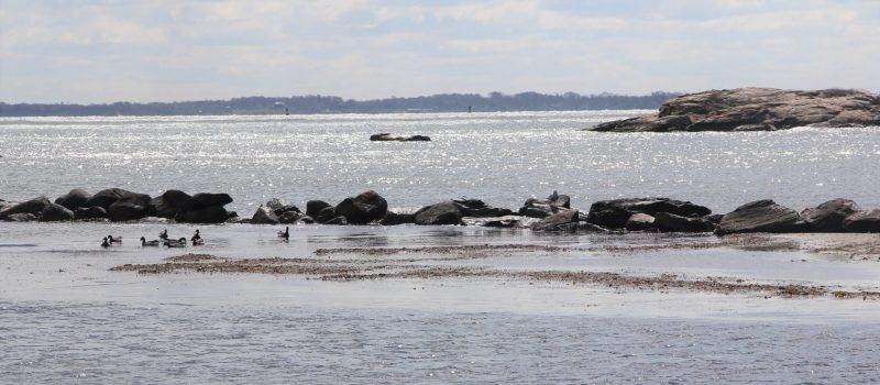Alewife Cove in New London on Earth Day