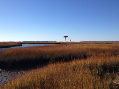 The salt marsh, creeks, and tidal flats at the Great Island Wildlife Management Area in the lower Connecticut River.