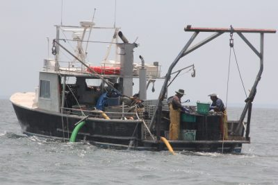 Crew members of Pot Luck, a vessel owned by Sam Fernandez of Sam's Seafood, sort clams from oysters as part of a restoration of natural shellfish beds near Bridgeport on June 10.