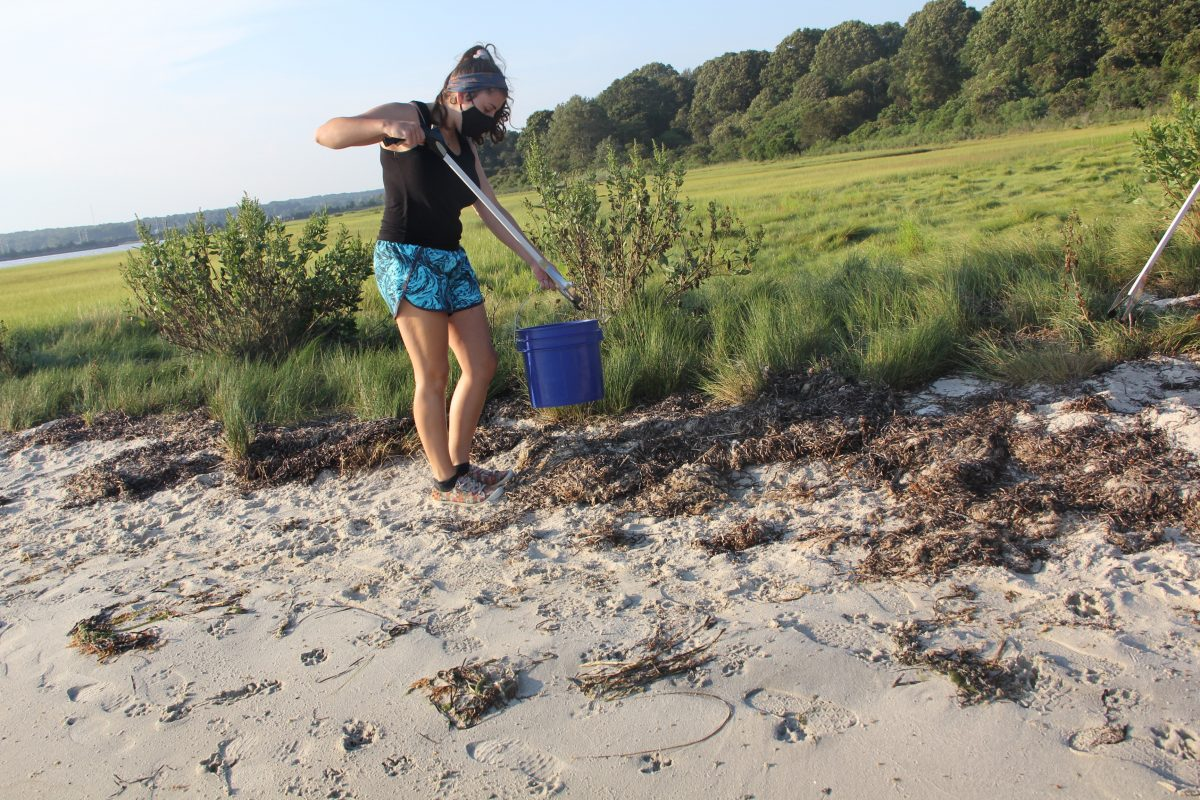 Emma O'Connor, a senior at Eckerd College in St. Petersburg, Fla., picks up trash on the marsh at Barn Island.