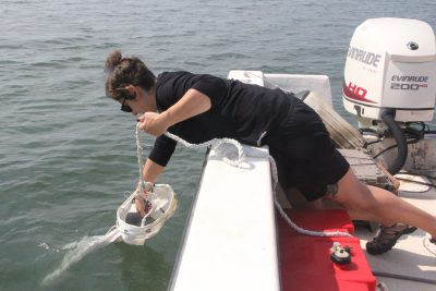 Kristin Russo, environmental analyst at the state Department of Agriculture Bureau of Aquaculture, collects a water sample in Milford using a plankton net in June.