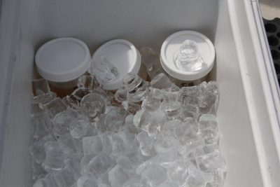 The water samples are packed on ice for transport back to the lab in Milford.