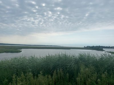 The marsh at Founders Memorial Park in Old Saybrook is one of the sites Schechter visited for her summer 2020 internship.
