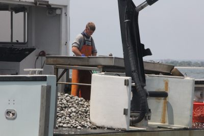 A G&B Shellfish Farm crewman sorts oysters from clams aboard the Stasie Frances on June 10. The vessel was working natural shellfish beds offshore from Fairfield as part of the natural shellfish bed restoration project led by Connecticut Sea Grant and the Connecticut Department of Agriculture/Bureau of Aquaculture.