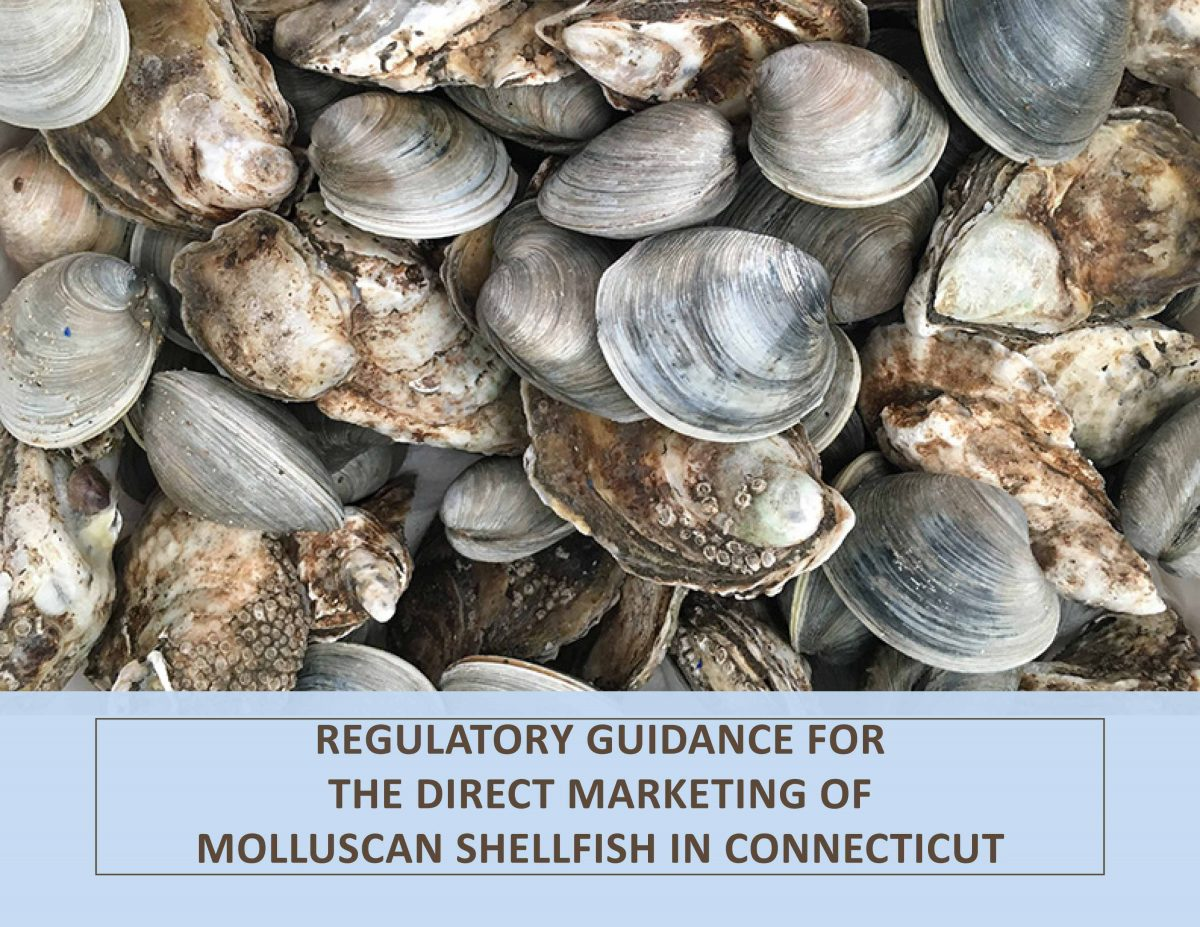 Cover of Regulatory Guidance for the Direct Marketing of Molluscan Shellfish in Connecticut