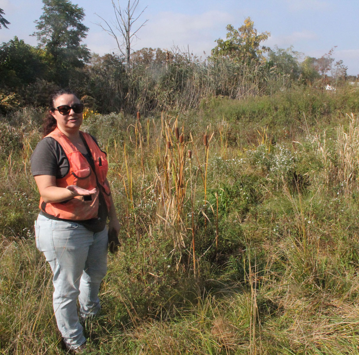 Walker describes how wetland species such as the cattails beside her have spontaneously begun to recolonize some of the former home sites in the West Haven neighborhood.