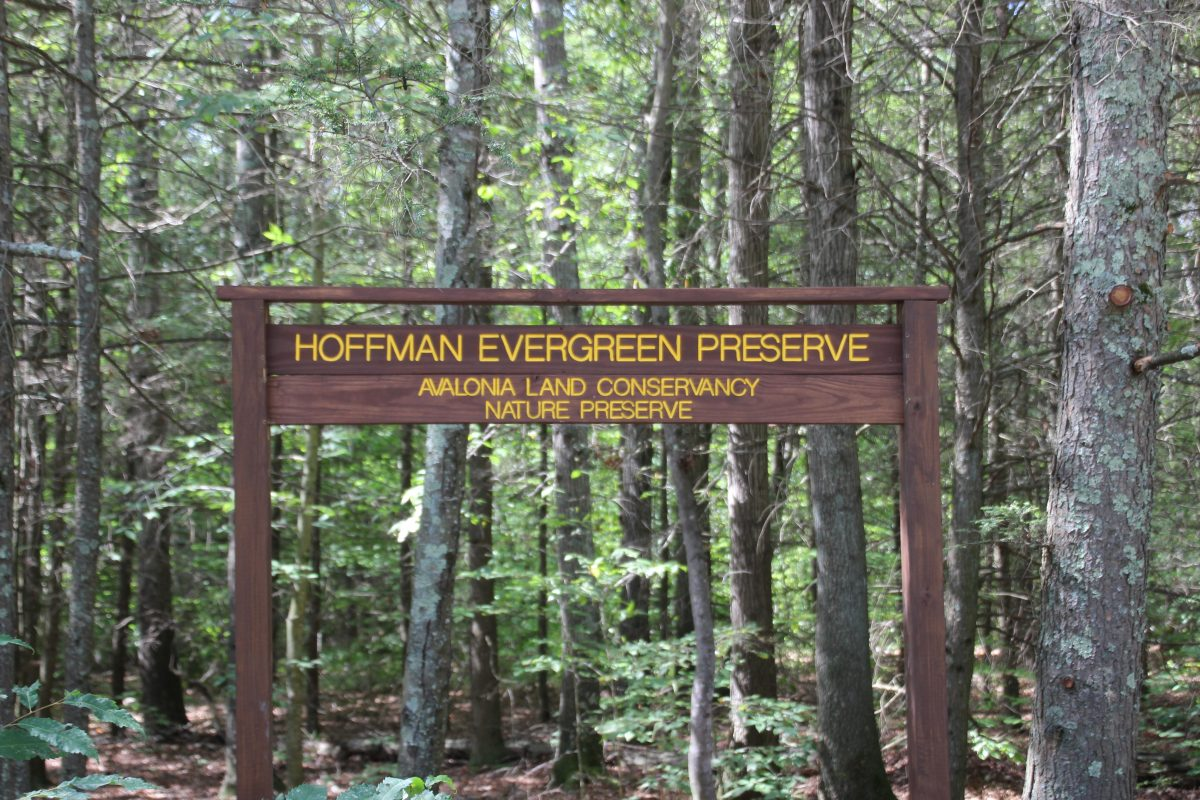 A sign marks the entrance to the Hoffman Evergreen Preserve in Stonington.