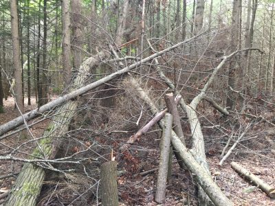 Many trees and large branches were felled by a series of coastal storms, disease and insect infestations, causing the hiking trails to become unsafe.