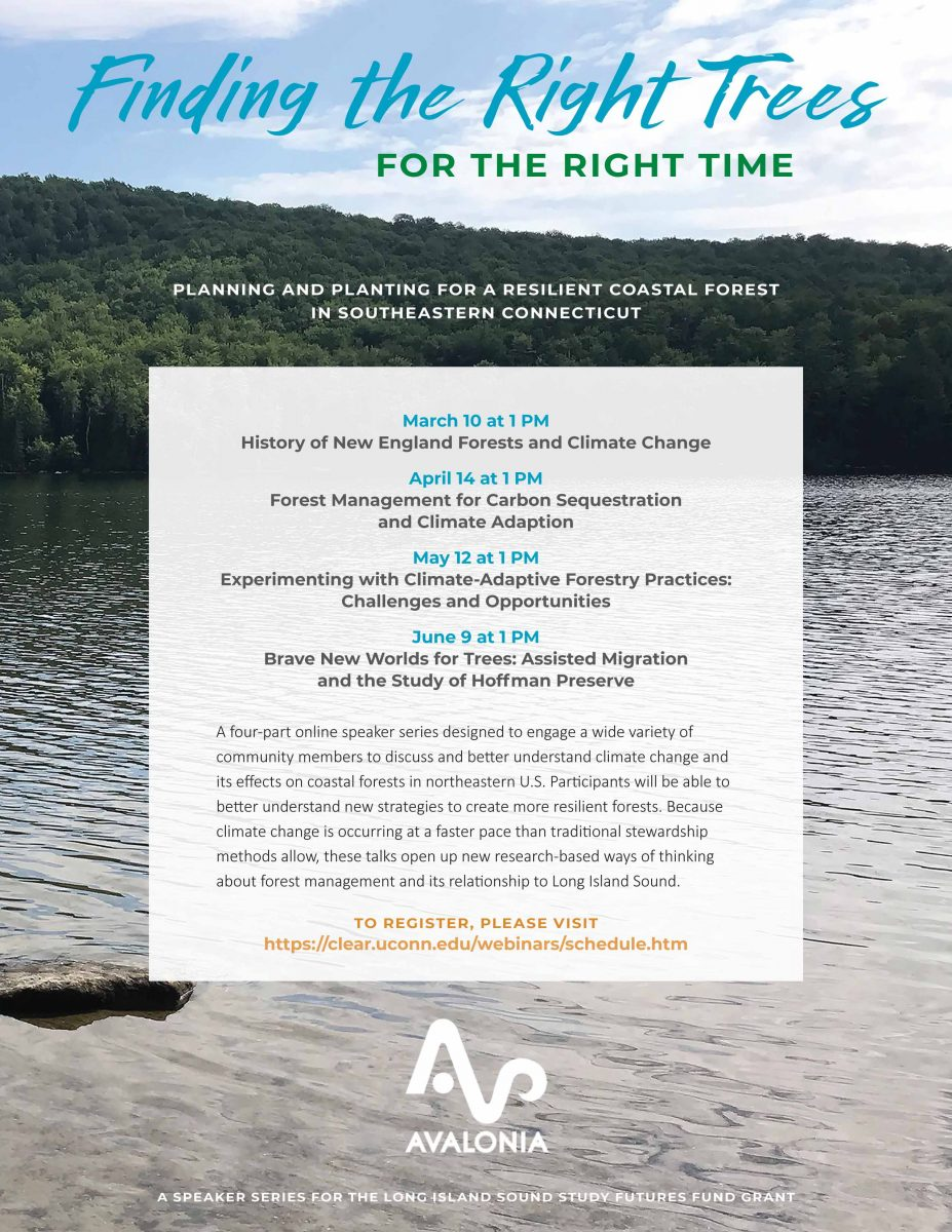 """Flyer for """"Finding the Right Trees for the Right Time"""" program"""