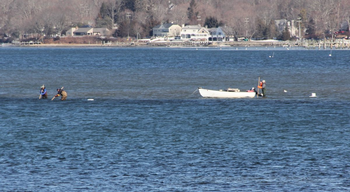 Clammers search for shellfish in the Niantic River on Feb. 6. in the winter months. These clammers could be seen from shore on Feb. 6.