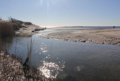 The tidal creek at Goshen Cove at Harkness Memorial State Park in Waterford is one of the many locations on Long Island Sound that can provide material for science lessons.